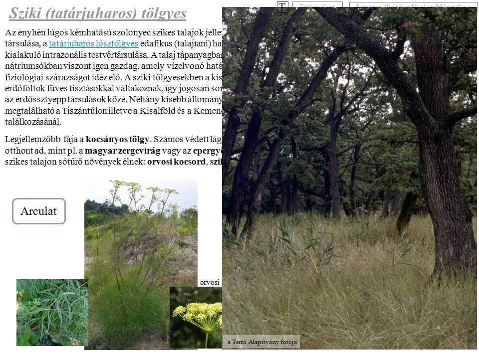 Az enyhén lúgos kémhatású szolonyec szikes talajok jellemző fás társulása, a tatárjuharos lösztölgyes edafikus (talajtani) hatásokra kialakuló intrazo