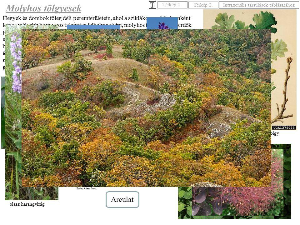 Hegyek és dombok főleg déli peremterületein, ahol a sziklákon csak helyenként képes mélyebb humuszos talajréteg felhalmozódni, molyhos tölgyes bokorer