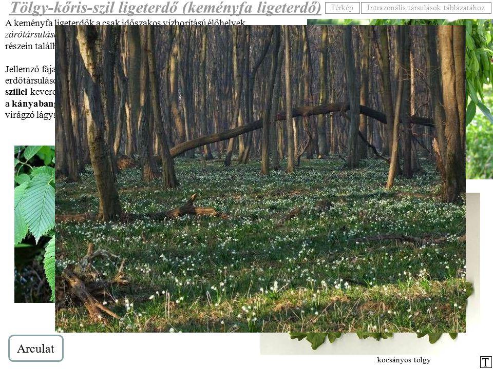 A keményfa ligeterdők a csak időszakos vízborítású élőhelyek zárótársulásai. Elsősorban nagy folyóink ártereinek magasabb fekvésű részein találhatjuk