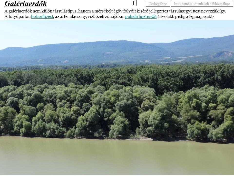 A galériaerdők nem külön társulástípus, hanem a mérsékelt égöv folyóit kísérő jellegzetes társulásegyüttest nevezzük így. A folyóparton bokorfüzest, a
