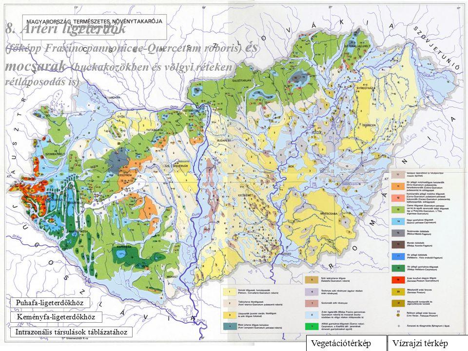 Vízrajzi térképVegetációtérkép 8. Ártéri ligeterdők (főképp Fraxino pannonicae-Quercetum roboris) és mocsarak (buckakozökben és völgyi réteken rétlápo
