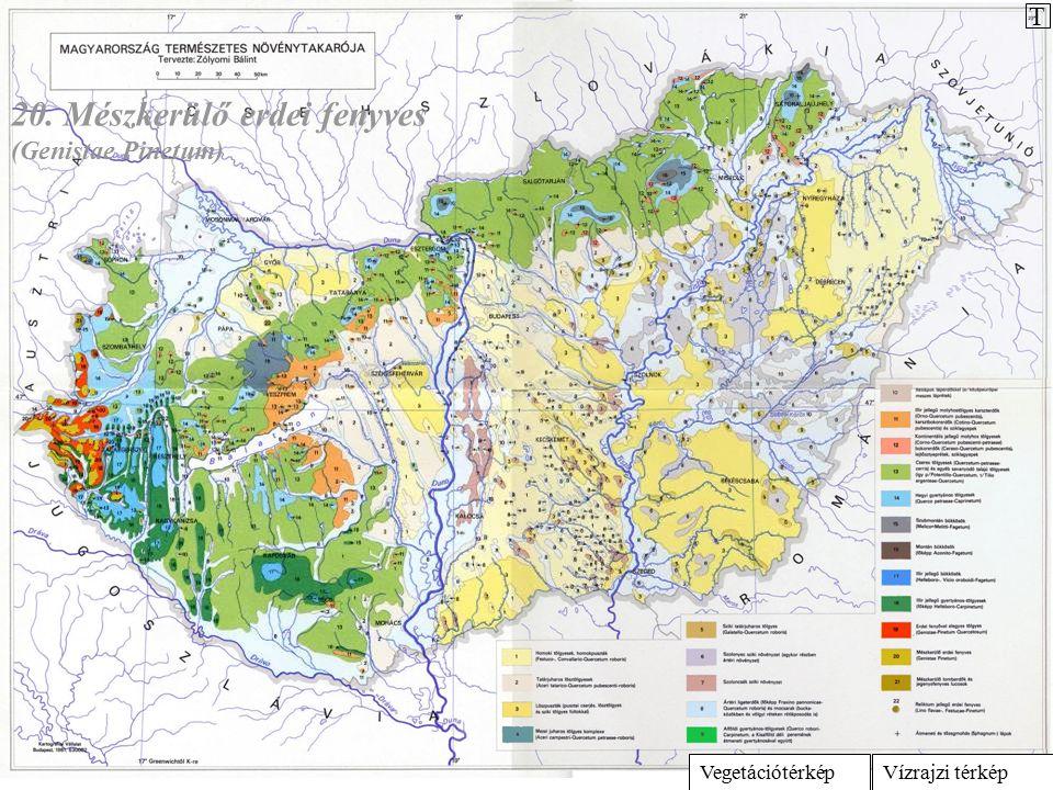 Vízrajzi térképVegetációtérkép 20. Mészkerülő erdei fenyves (Genistae Pinetum) T