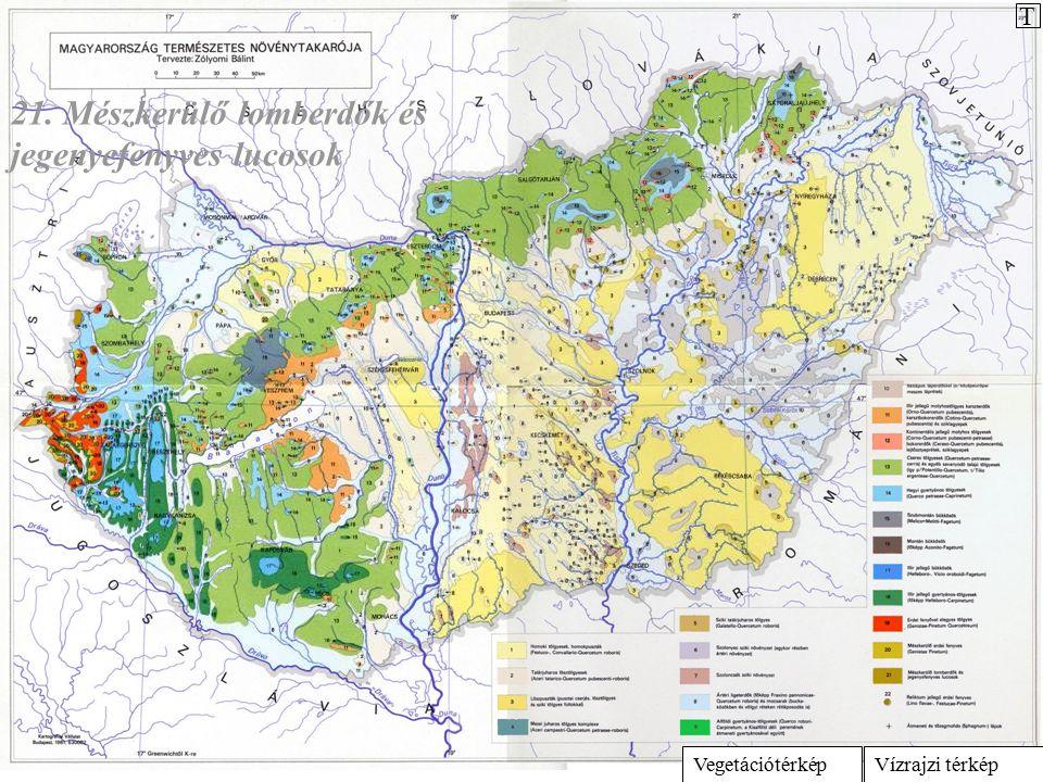 Vízrajzi térképVegetációtérkép 21. Mészkerülő lomberdők és jegenyefenyves lucosok T