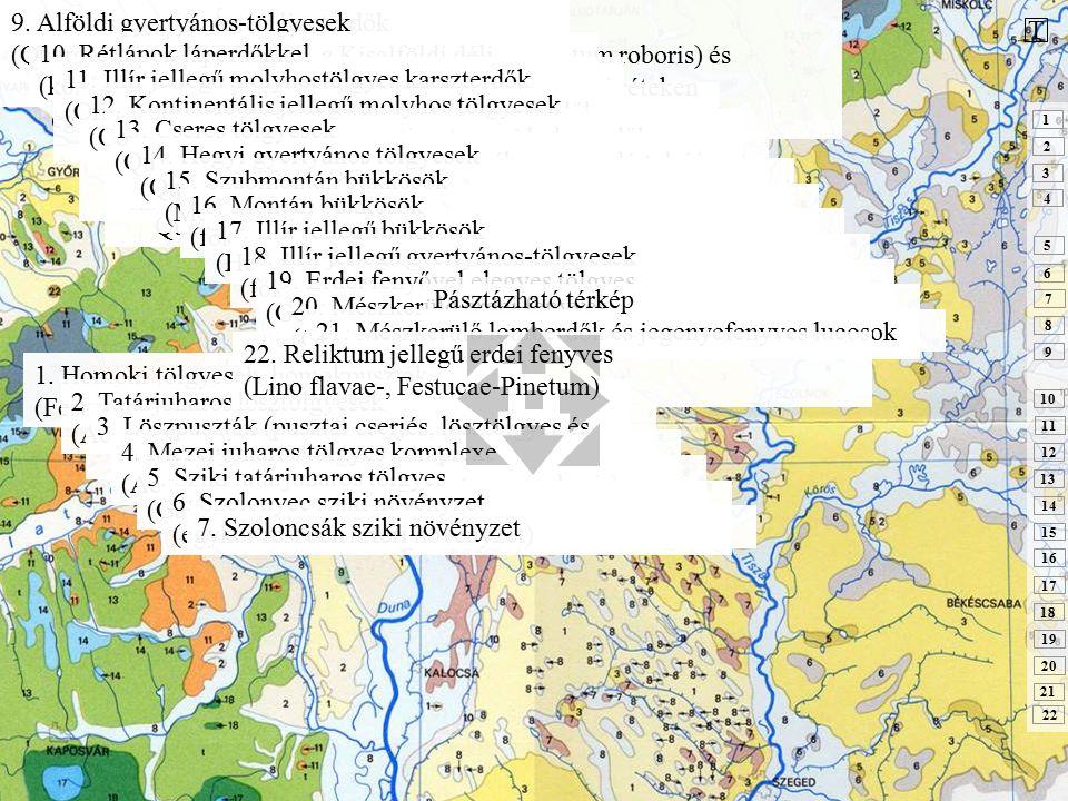 1. Homoki tölgyesek, homokpuszták (Festuco-, Convallario-Quercetum roboris) 2. Tatárjuharos lösztölgyesek (Aceri tatarico-Quercetum pubescenti-roboris