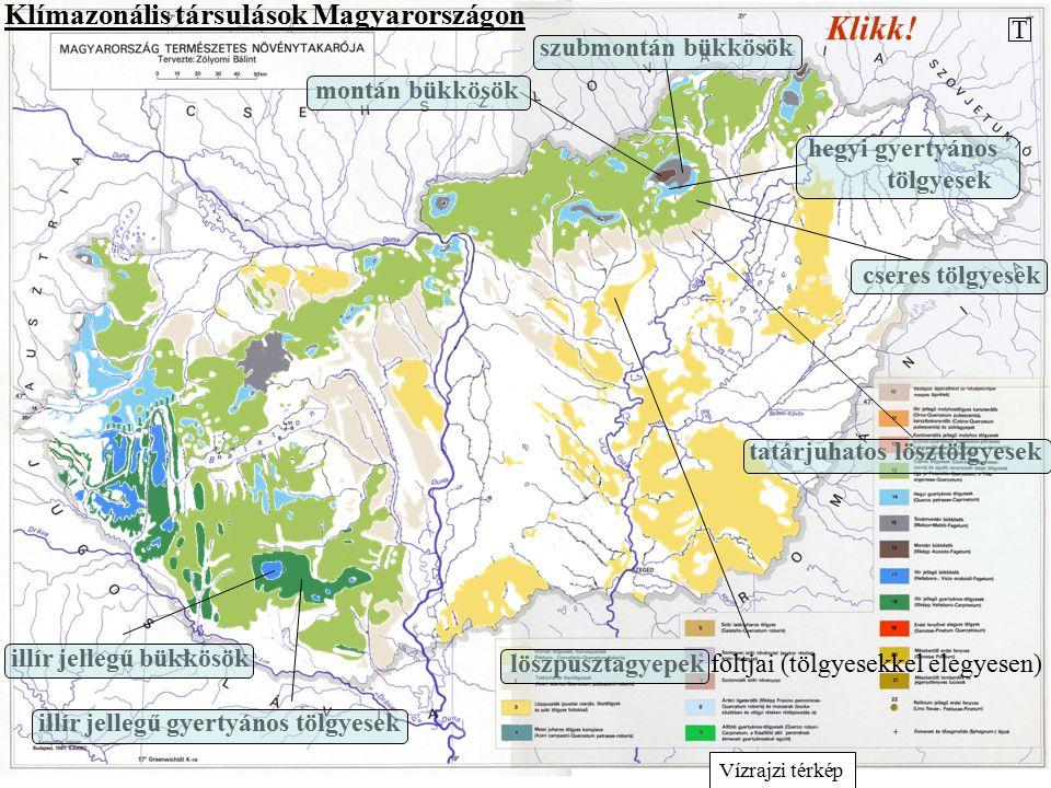 """Intrazonális társulások Magyarországon Az intrazonális társulások talajadottságok, domborzati viszonyok vagy víz hatására alakulnak ki, és ezek miatt térnek el az élőhely klímája alapján """"várható zonális társulástól."""