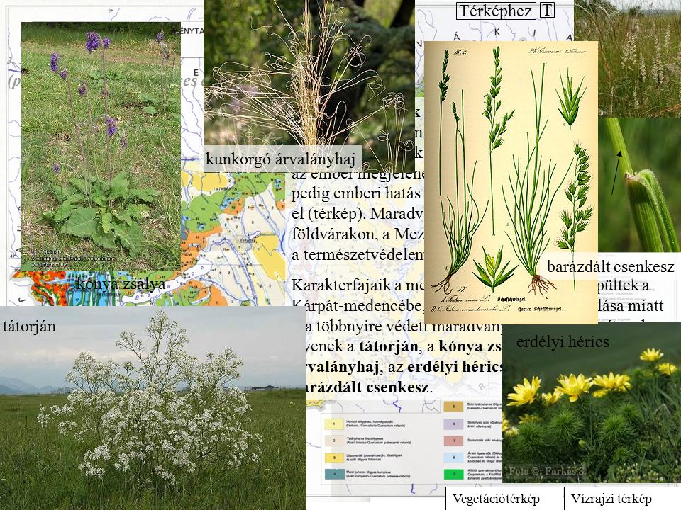 A magaskórós társulások a talajvízhez közeli felszíneken, a tápanyagban gazdag talajokon alakulnak ki.