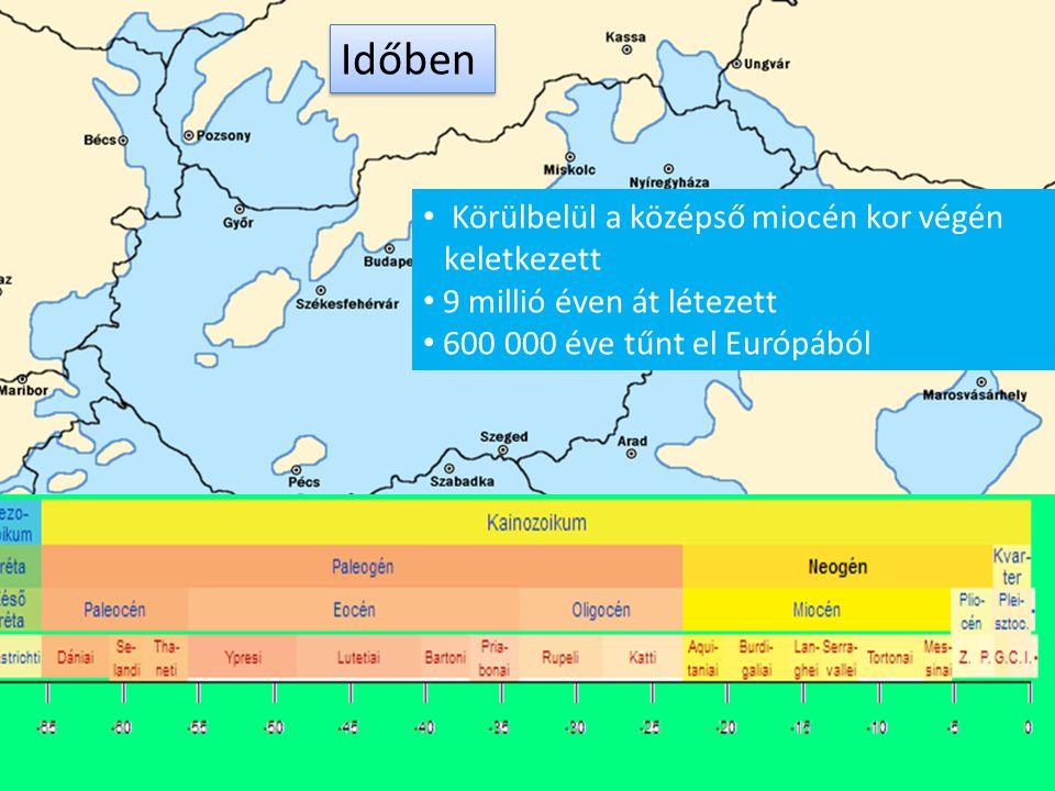 Körülbelül a középső miocén kor végén keletkezett 9 millió éven át létezett 600 000 éve tűnt el Európából Időben