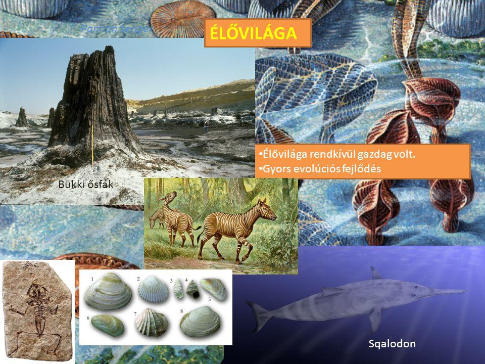 Pannon tenger Élővilága rendkívül gazdag volt. Gyors evolúciós fejlődés ÉLŐVILÁGA Sqalodon Bükki ősfák