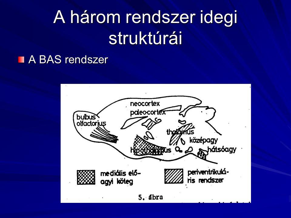 A három rendszer idegi struktúrái A BAS rendszer