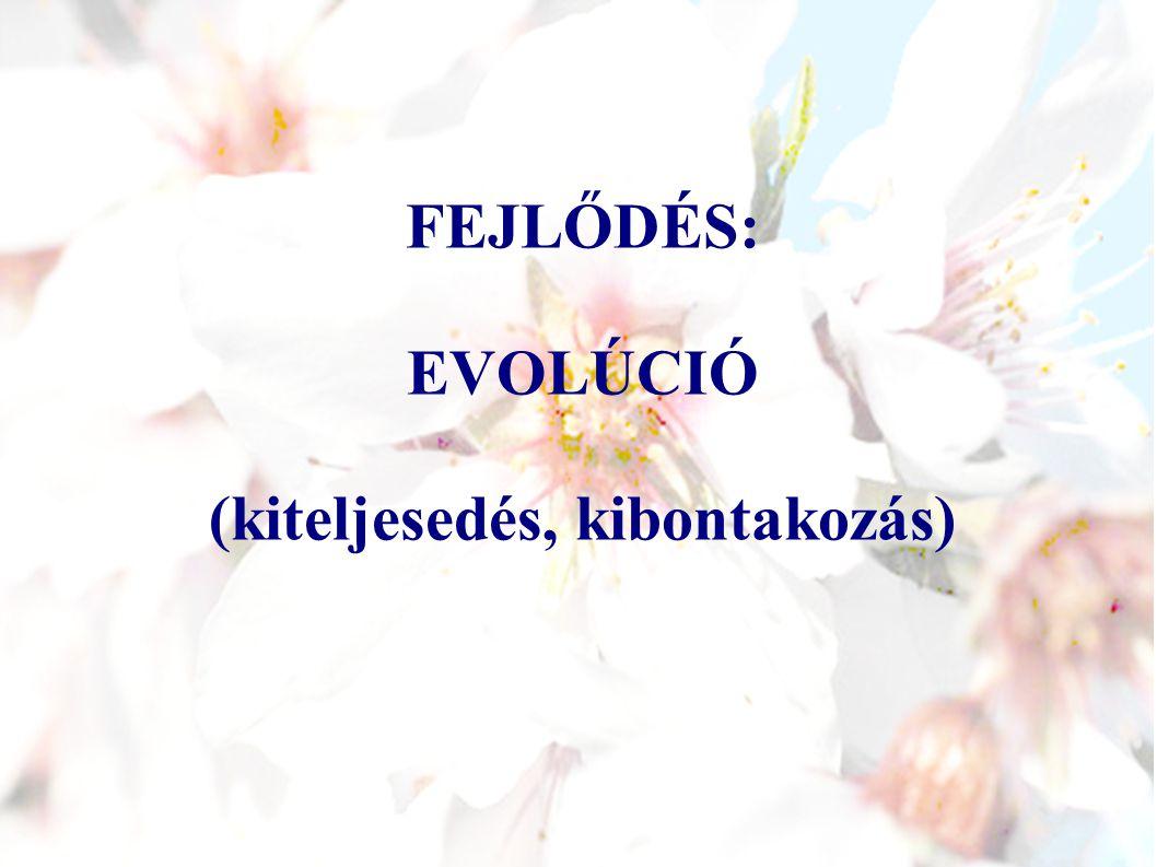 FEJLŐDÉS: EVOLÚCIÓ (kiteljesedés, kibontakozás)