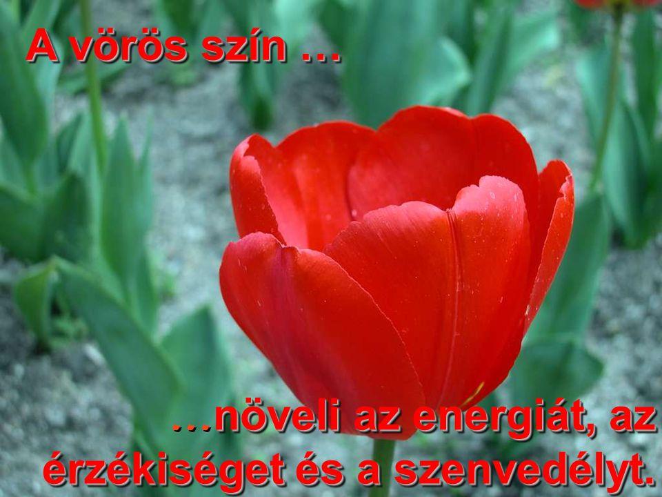 A vörös szín … növeli az energiát, az érzékiséget és a szenvedélyt.
