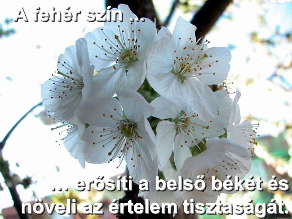 A fehér szín...A fehér szín... … erősíti a belső békét és növeli az értelem tisztaságát.