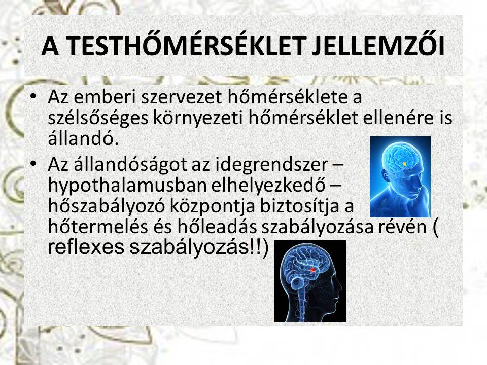 A TESTHŐMÉRSÉKLET JELLEMZŐI Magtemperatúra - a szervezet belsejében pl.