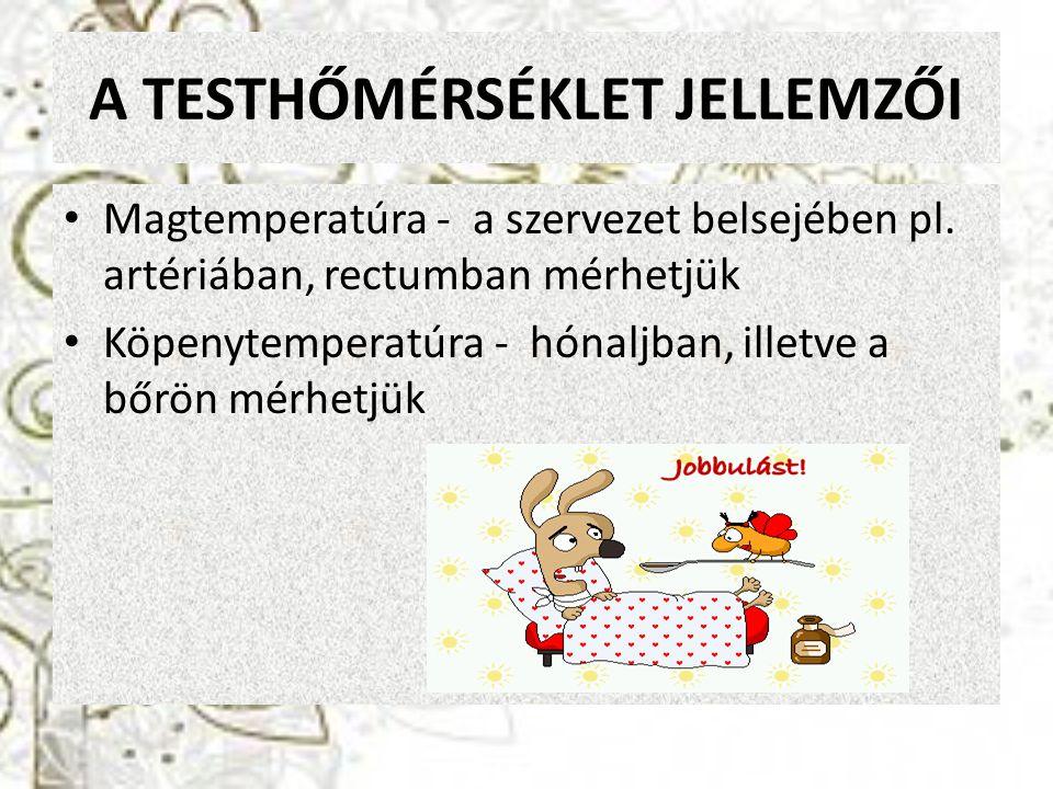 A TESTHŐMÉRSÉKLET JELLEMZŐI Magtemperatúra - a szervezet belsejében pl. artériában, rectumban mérhetjük Köpenytemperatúra - hónaljban, illetve a bőrön