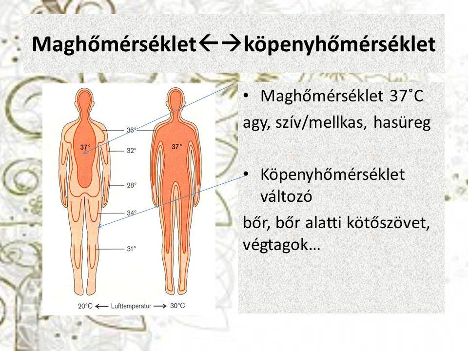 Maghőmérséklet  köpenyhőmérséklet Maghőmérséklet 37˚C agy, szív/mellkas, hasüreg Köpenyhőmérséklet változó bőr, bőr alatti kötőszövet, végtagok…