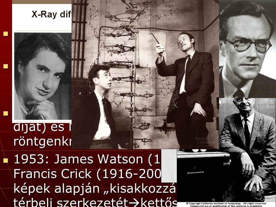 """A DNS szerkezete 1949 Chargaff: a DNS-ben mindig A=T és C=G 1949 Chargaff: a DNS-ben mindig A=T és C=G Linus Pauling (2 Nobel-díj): fehérje térszerkezet röntgendiffrakcióval (alfa- hélix) Linus Pauling (2 Nobel-díj): fehérje térszerkezet röntgendiffrakcióval (alfa- hélix) Rosalind Franklin (nem kapott Nobel- díjat) és Maurice Wilkins: DNS röntgenkrisztallográfia Rosalind Franklin (nem kapott Nobel- díjat) és Maurice Wilkins: DNS röntgenkrisztallográfia 1953: James Watson (1928-, biológus) és Francis Crick (1916-2004, fizikus) a képek alapján """"kisakkozzák a DNS térbeli szerkezetét  kettős hélix 1953: James Watson (1928-, biológus) és Francis Crick (1916-2004, fizikus) a képek alapján """"kisakkozzák a DNS térbeli szerkezetét  kettős hélix"""