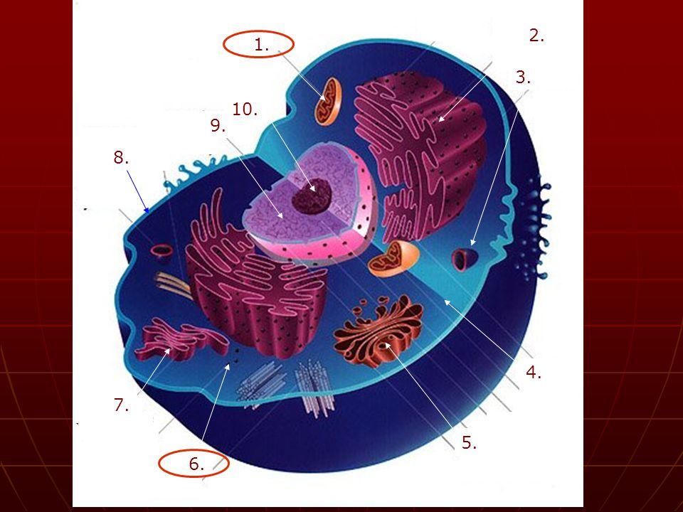 állat állat a.petesejt b. hám c. szempillahám d. mirigy e.