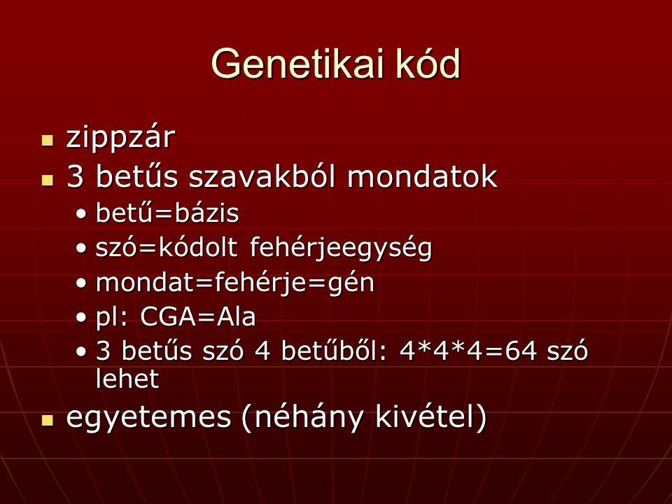 Genetikai kód zippzár zippzár 3 betűs szavakból mondatok 3 betűs szavakból mondatok betű=bázisbetű=bázis szó=kódolt fehérjeegységszó=kódolt fehérjeegység mondat=fehérje=génmondat=fehérje=gén pl: CGA=Alapl: CGA=Ala 3 betűs szó 4 betűből: 4*4*4=64 szó lehet3 betűs szó 4 betűből: 4*4*4=64 szó lehet egyetemes (néhány kivétel) egyetemes (néhány kivétel)