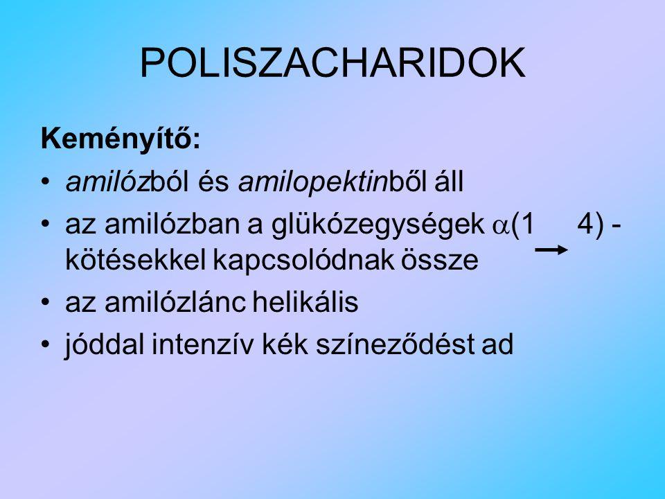 POLISZACHARIDOK Keményítő: amilózból és amilopektinből áll az amilózban a glükózegységek  (1 4) - kötésekkel kapcsolódnak össze az amilózlánc helikális jóddal intenzív kék színeződést ad