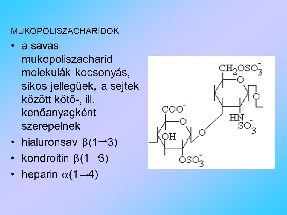 MUKOPOLISZACHARIDOK a savas mukopoliszacharid molekulák kocsonyás, síkos jellegűek, a sejtek között kötő-, ill.