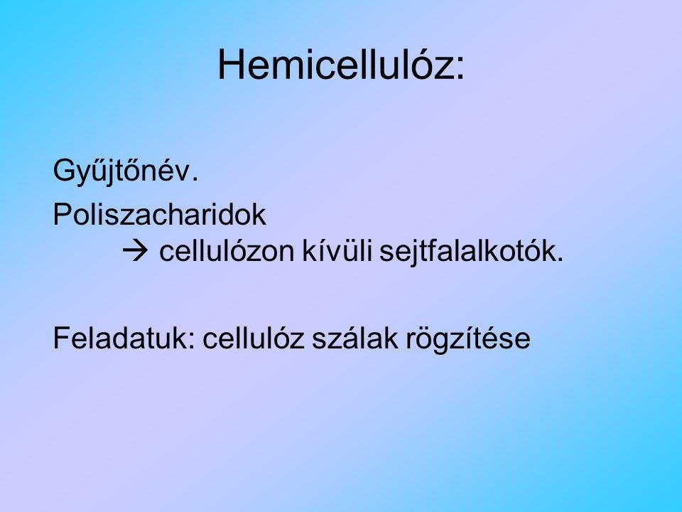 Hemicellulóz: Gyűjtőnév.Poliszacharidok  cellulózon kívüli sejtfalalkotók.