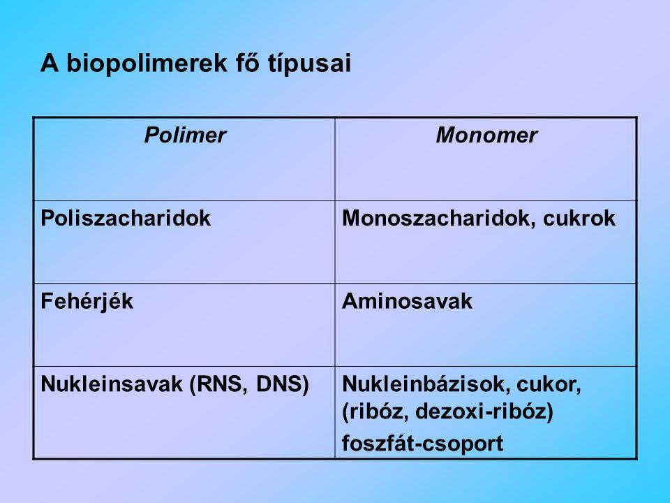 A biopolimerek fő típusai PolimerMonomer PoliszacharidokMonoszacharidok, cukrok FehérjékAminosavak Nukleinsavak (RNS, DNS)Nukleinbázisok, cukor, (ribóz, dezoxi-ribóz) foszfát-csoport