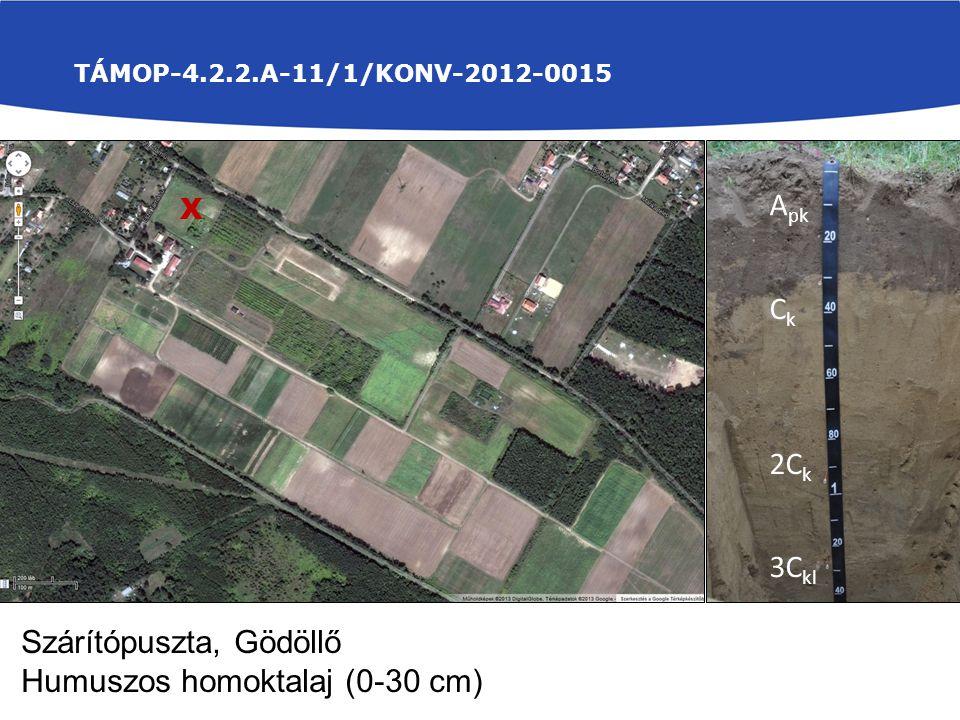 Talajmintavétel: TÁMOP-4.2.2.A-11/1/KONV-2012-0015 X A pk C k 2C k 3C kl Szárítópuszta, Gödöllő Humuszos homoktalaj (0-30 cm)