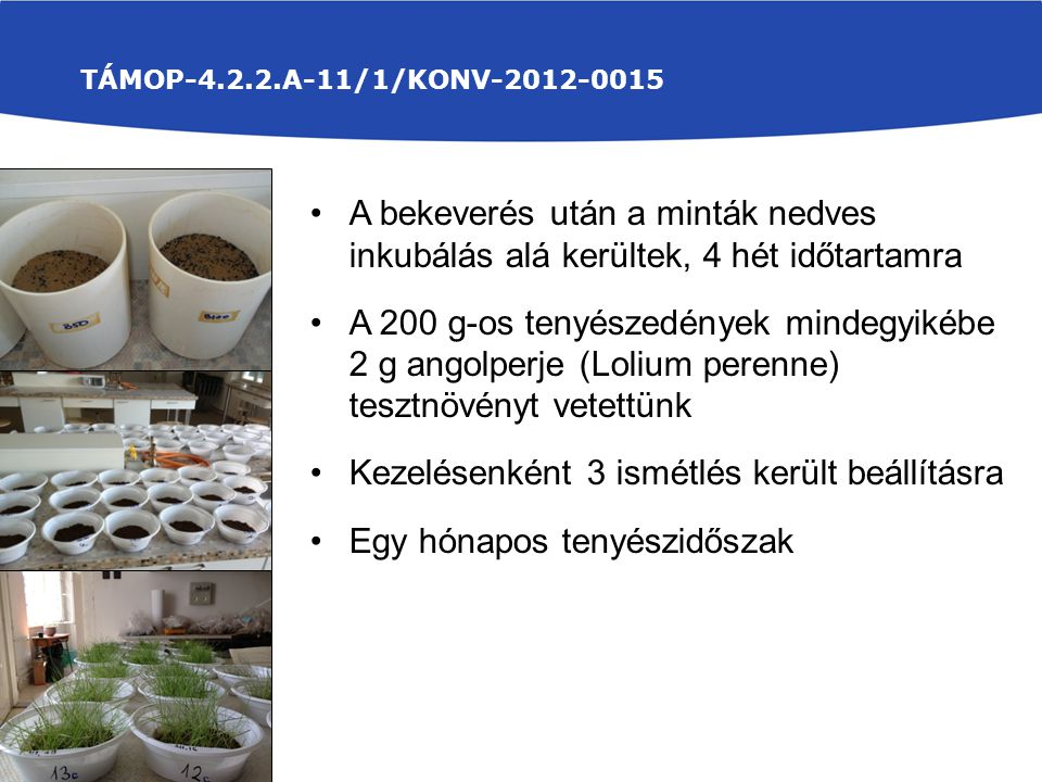 TÁMOP-4.2.2.A-11/1/KONV-2012-0015 A bekeverés után a minták nedves inkubálás alá kerültek, 4 hét időtartamra A 200 g-os tenyészedények mindegyikébe 2