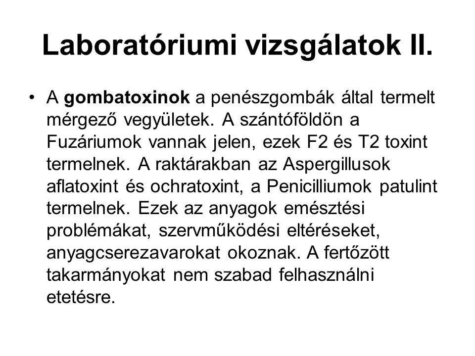 Laboratóriumi vizsgálatok II. A gombatoxinok a penészgombák által termelt mérgező vegyületek. A szántóföldön a Fuzáriumok vannak jelen, ezek F2 és T2