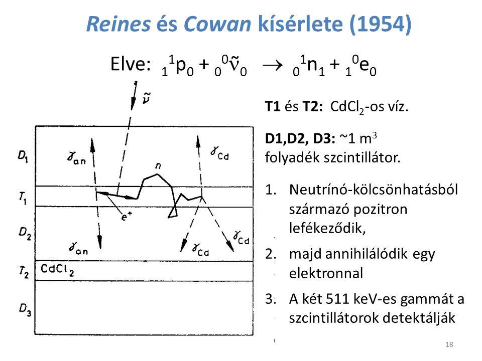 Reines és Cowan kísérlete (1954) T1 és T2: CdCl 2 -os víz. D1,D2, D3: ~1 m 3 folyadék szcintillátor. 1.Neutrínó-kölcsönhatásból származó pozitron lefé