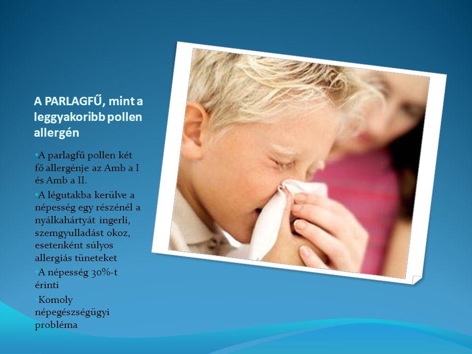 A PARLAGFŰ, mint a leggyakoribb pollen allergén A parlagfű pollen két fő allergénje az Amb a I és Amb a II.