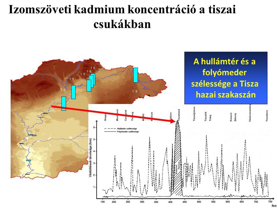 Izomszöveti kadmium koncentráció a tiszai csukákban A hullámtér és a folyómeder szélessége a Tisza hazai szakaszán