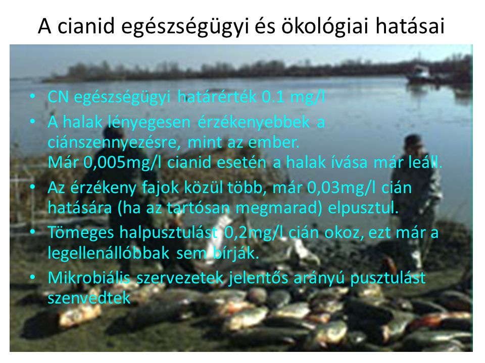 A cianid egészségügyi és ökológiai hatásai CN egészségügyi határérték 0.1 mg/l A halak lényegesen érzékenyebbek a ciánszennyezésre, mint az ember. Már