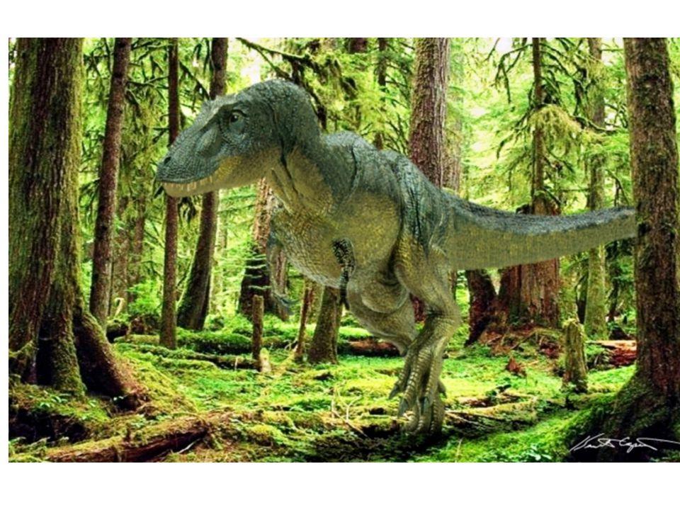 Madarak a jurában fejlődtek ki a hüllőkből (2 lábon futó dinoszauruszból) Átmeneti forma - Archeopteryx Madár jelleg: Szárny, toll, madárszerű medenceöv Hüllő jelleg: Csigolyás farok, nincs csőr, kúpos fogak állkapocsban, kézközépcsontok nem összenőttek és 3 mozgatható karmos ujja van.