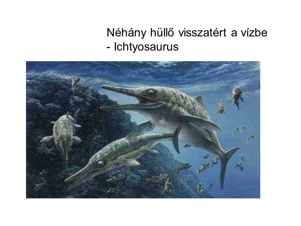 Néhány hüllő visszatért a vízbe - Ichtyosaurus