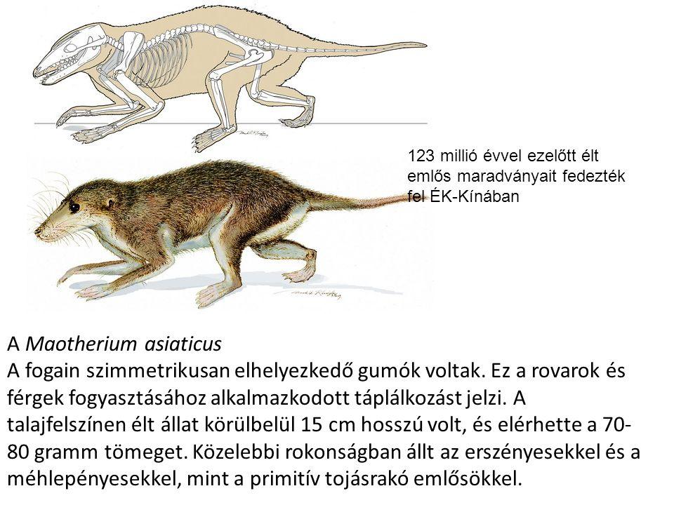 A kréta végén óriási kipusztulás Kihalnak: Növények Ammoniták Puhatestűek Őshüllők (dinoszauruszok) Megnyílik az út az emlősök, madarak és zárvatermők előtt Állatfajok ¾-e!!!