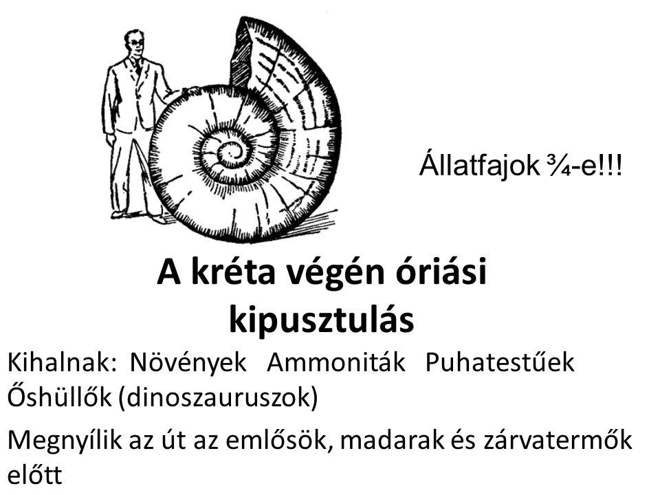 A kréta végén óriási kipusztulás Kihalnak: Növények Ammoniták Puhatestűek Őshüllők (dinoszauruszok) Megnyílik az út az emlősök, madarak és zárvatermők