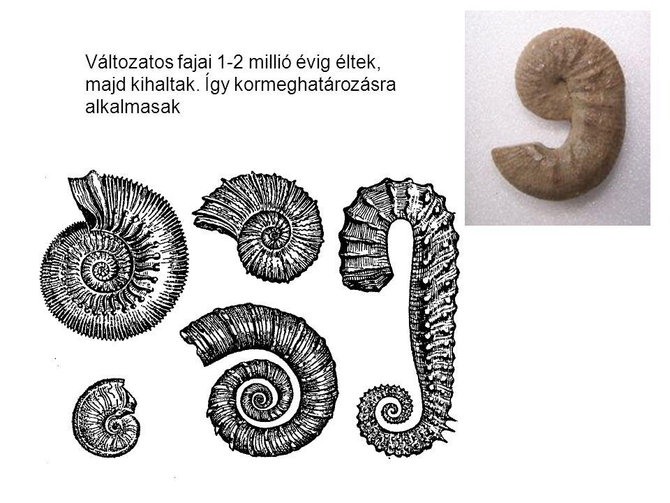 Változatos fajai 1-2 millió évig éltek, majd kihaltak. Így kormeghatározásra alkalmasak
