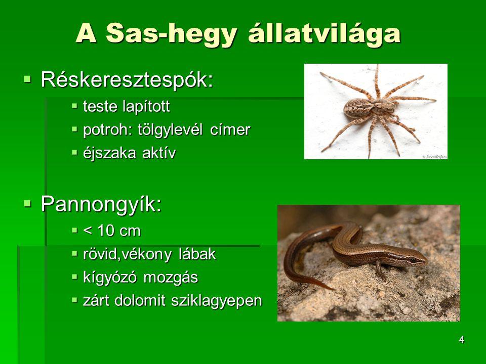 4 A Sas-hegy állatvilága  Réskeresztespók:  teste lapított  potroh: tölgylevél címer  éjszaka aktív  Pannongyík:  < 10 cm  rövid,vékony lábak 