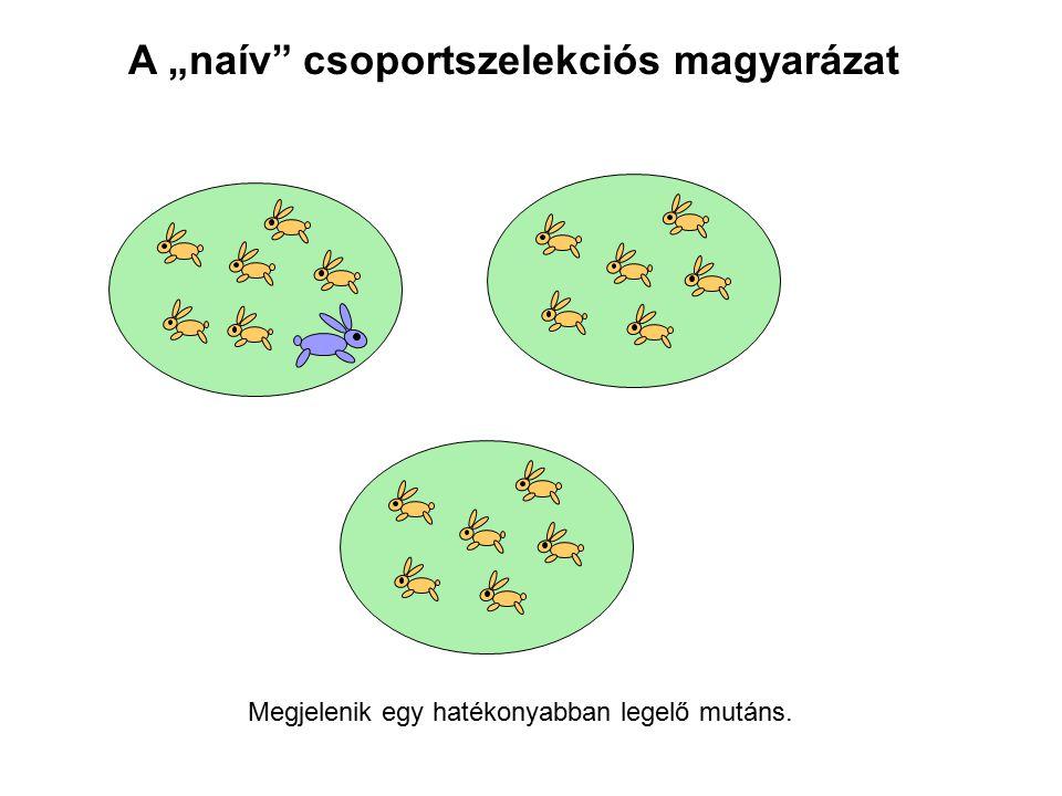 """A """"naív"""" csoportszelekciós magyarázat Megjelenik egy hatékonyabban legelő mutáns."""