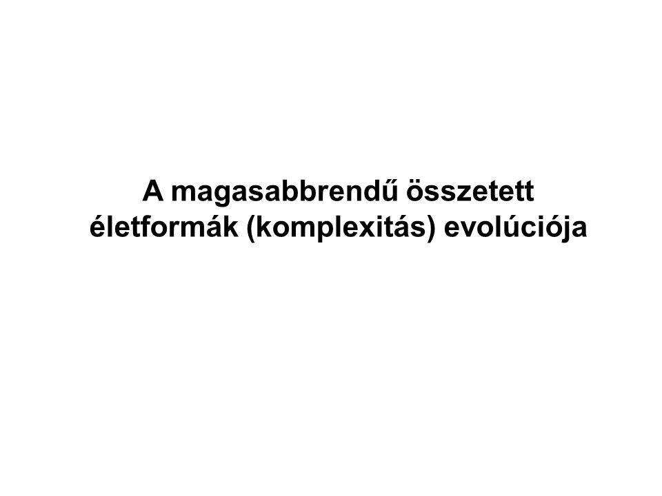 A magasabbrendű összetett életformák (komplexitás) evolúciója