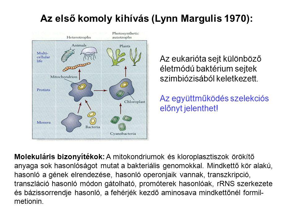 Az első komoly kihívás (Lynn Margulis 1970): Az eukarióta sejt különböző életmódú baktérium sejtek szimbiózisából keletkezett. Az együttműködés szelek