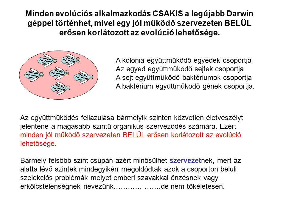 A kolónia együttműködő egyedek csoportja Az egyed együttműködő sejtek csoportja A sejt együttműködő baktériumok csoportja A baktérium együttműködő gén
