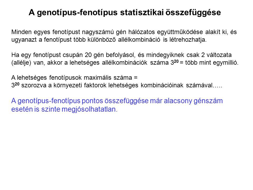 A genotípus-fenotípus statisztikai összefüggése Minden egyes fenotípust nagyszámú gén hálózatos együttműködése alakít ki, és ugyanazt a fenotípust töb