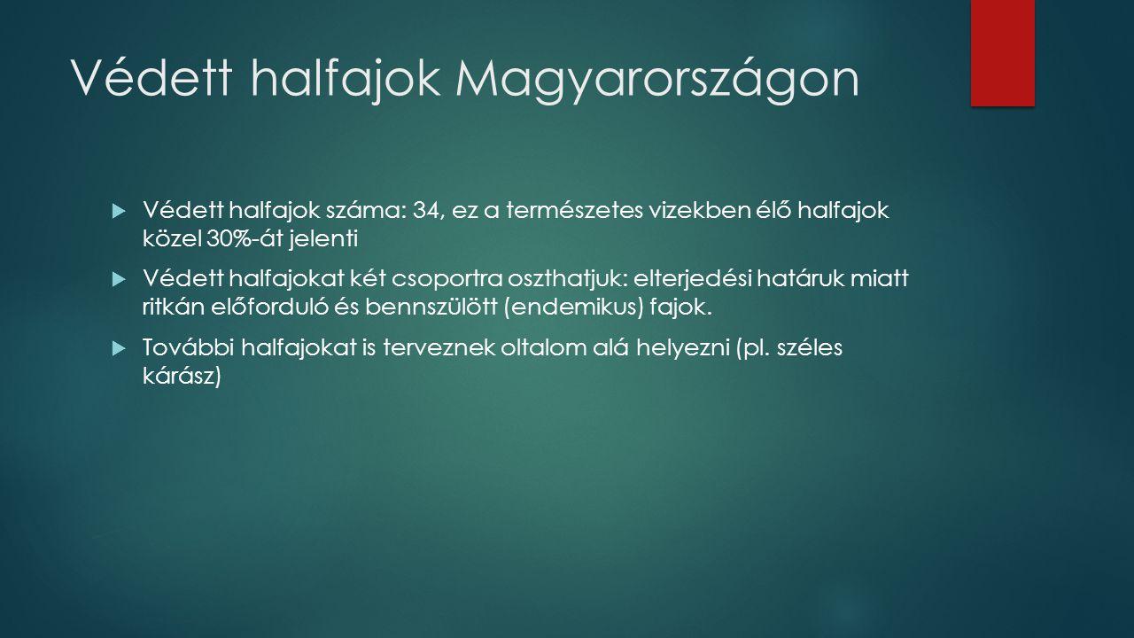 Védett halfajok Magyarországon  Védett halfajok száma: 34, ez a természetes vizekben élő halfajok közel 30%-át jelenti  Védett halfajokat két csopor
