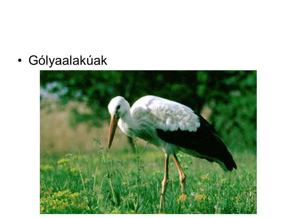 Gólyaalakúak
