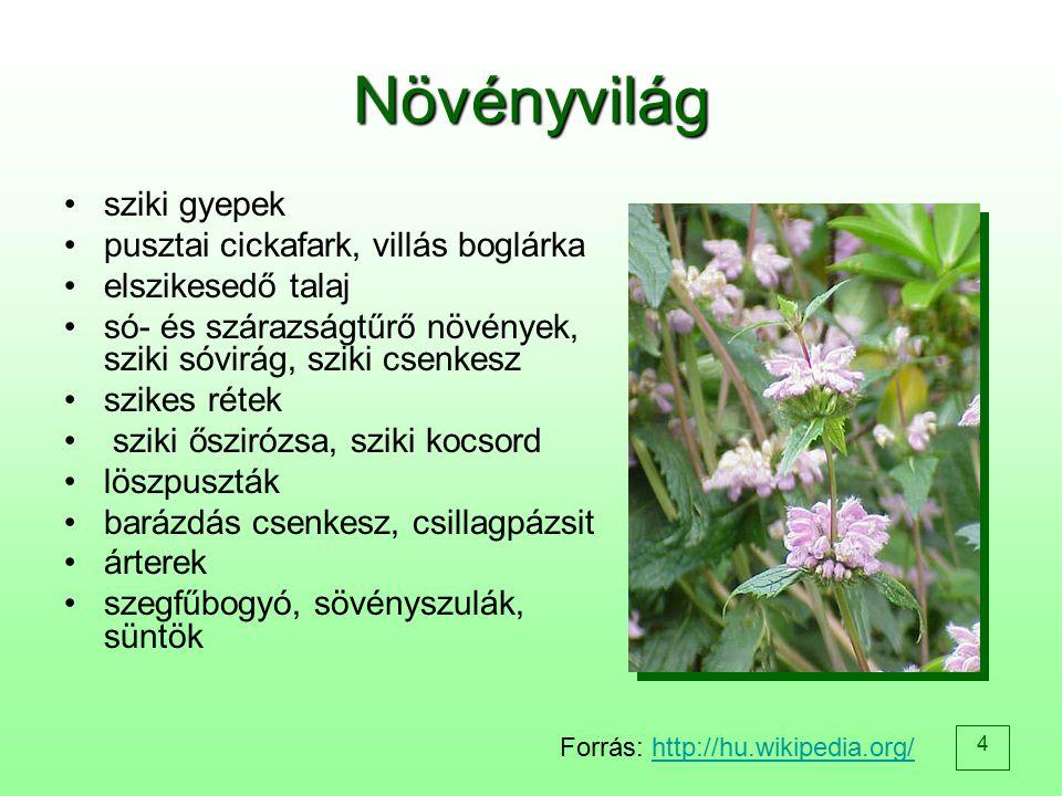 4 Növényvilág sziki gyepek pusztai cickafark, villás boglárka elszikesedő talaj só- és szárazságtűrő növények, sziki sóvirág, sziki csenkesz szikes ré