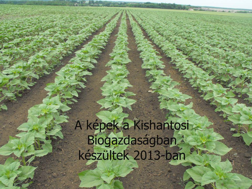 A képek a Kishantosi Biogazdaságban készültek 2013-ban