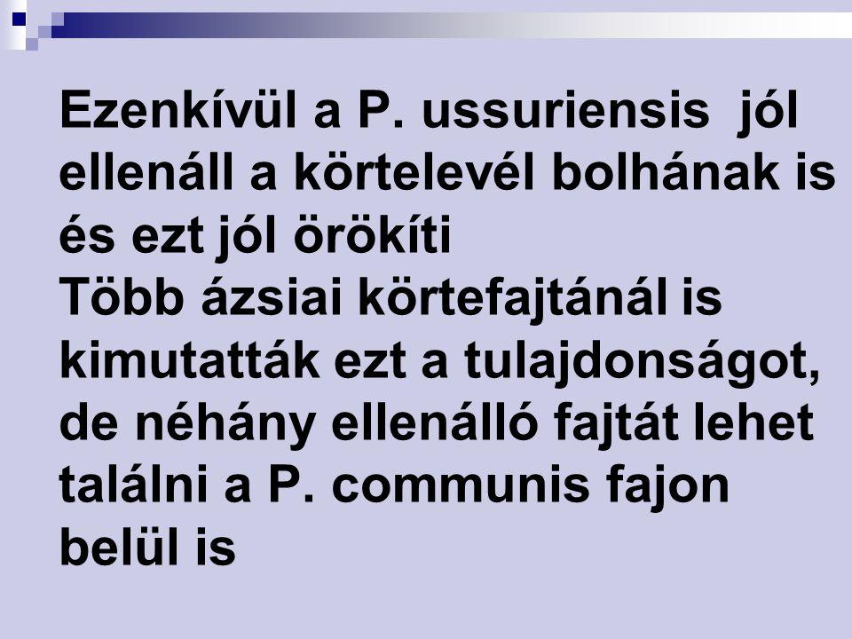 Ezenkívül a P. ussuriensis jól ellenáll a körtelevél bolhának is és ezt jól örökíti Több ázsiai körtefajtánál is kimutatták ezt a tulajdonságot, de né