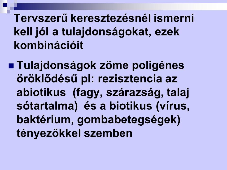 Tervszerű keresztezésnél ismerni kell jól a tulajdonságokat, ezek kombinációit Tulajdonságok zöme poligénes öröklődésű pl: rezisztencia az abiotikus (